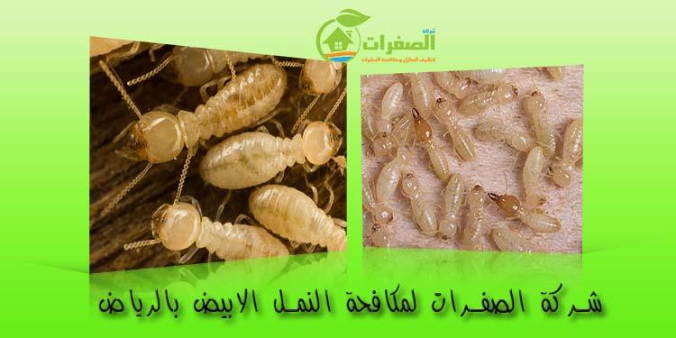 شركة الصفرات لمكافحة النمل الابيض بالرياض