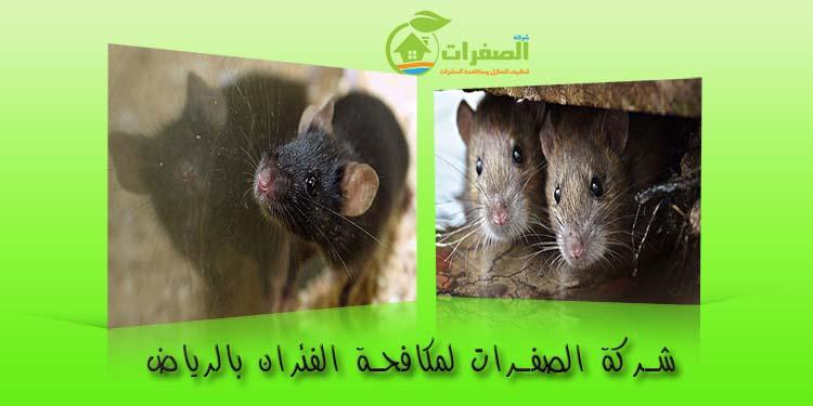 شركة الصفرات لمكافحة الفئران بالرياض