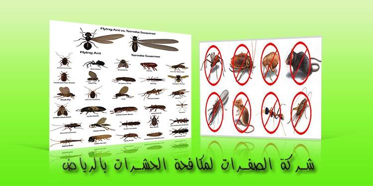 شركة الصفرات لمكافحة الحشرات بالرياض